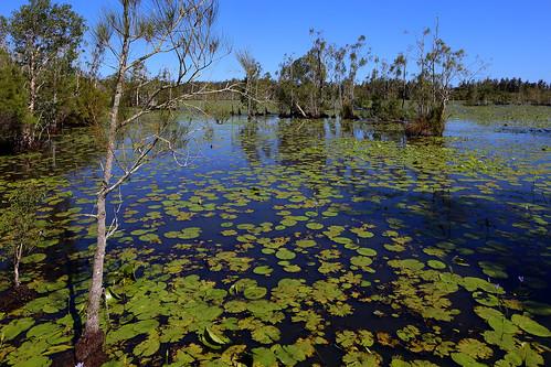 Cattai Wetlands
