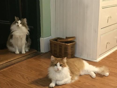 Clark and Winston