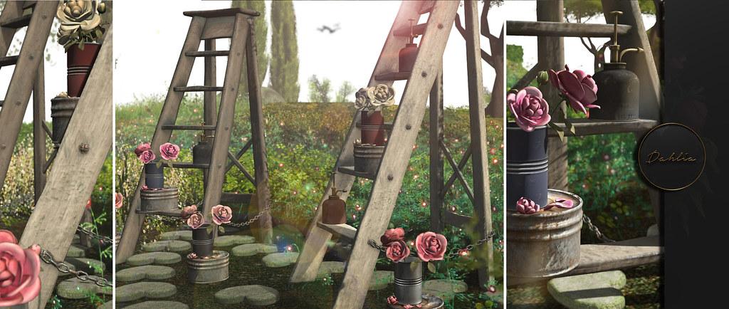 Dahlia – Jardin