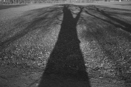 DSCF4170Tree shadow