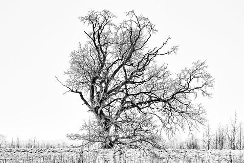 Unbalanced tree!