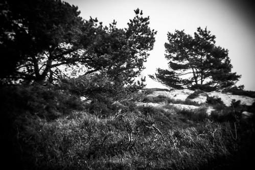 Trees as seen thru a Holga lens