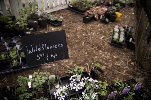 Six Dollar Wildflowers