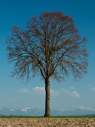L'arbre, en attente du printemps