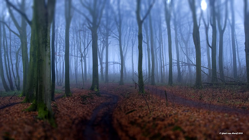 Kluisbos Belgium - Tilt Shift siimulated