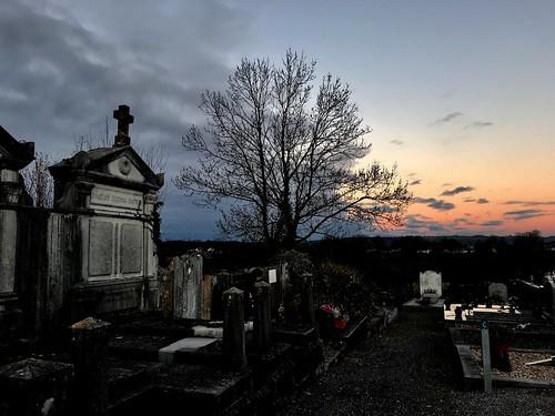 El árbol del cementerio