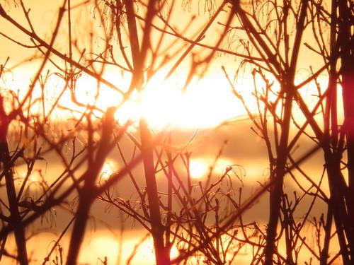 00778908 Sunset