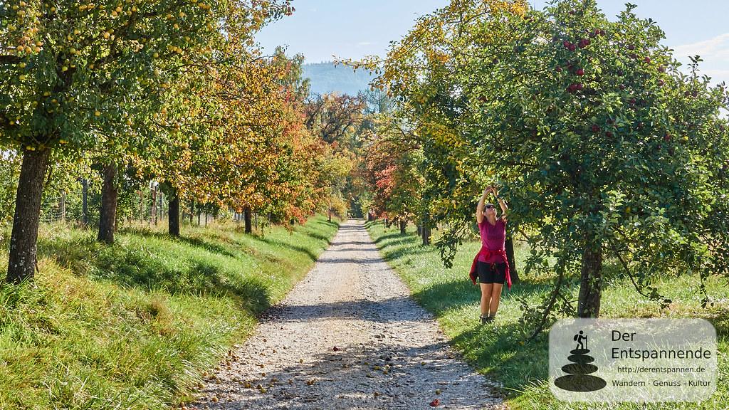 Obstbäume obehalb von Ludwigshafen