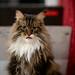 036 - cats cats cats- B9504244