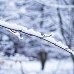 Im Winter Wald - 18. Januar 2019 - Schleswig-Holstein - Deutschland