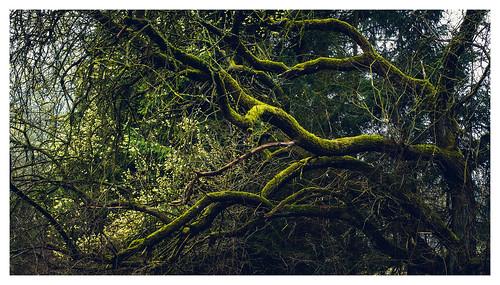 Moosbedeckter Baum