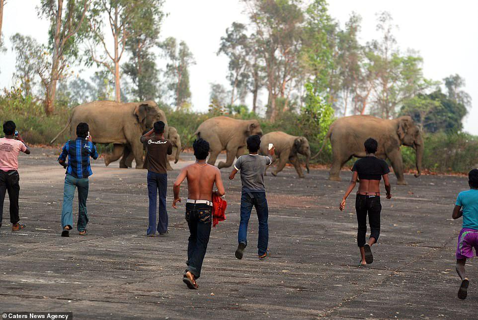 Elefantes-son-atacados-con-bombas