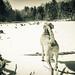 Jack on a frozen lake