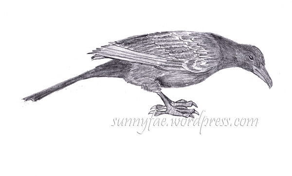 graphite drawing of a red winged sparrow