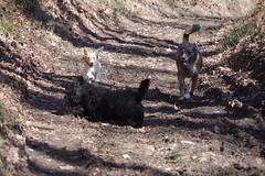 Balade canine - Photo of Le Douhet