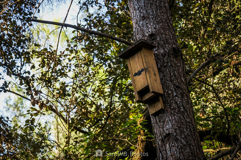Nido para murciélagos en un pino del Fondo de la Senabre, en el Parc Natural del Foix