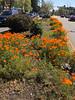 Spring Alcatraz & San Pablo Ave