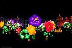 festival des lanternes Gaillac.