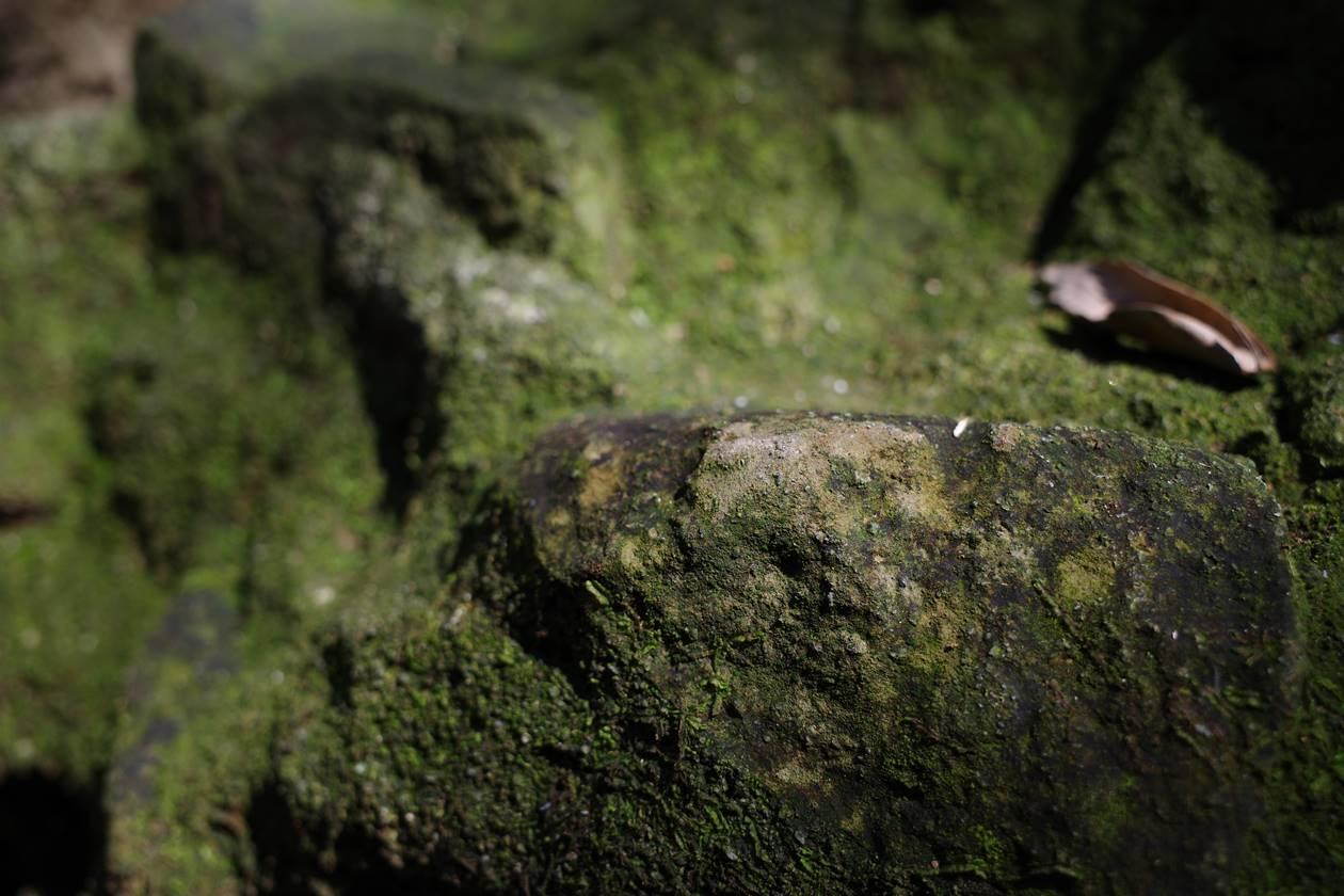 猿島 岩と苔