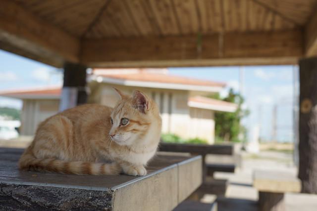 Cat in Oujima