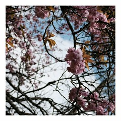 C'est le printemps !!! - Photo of Commeny