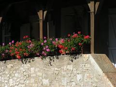 20080916 38017 1017 Jakobus Blumen Mauer Treppe - Photo of Pern