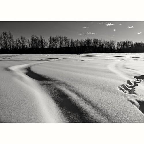 March 9th: Creamer's Field Alaska