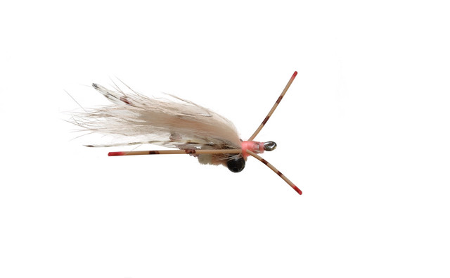 Colby's Casuarina Spinner