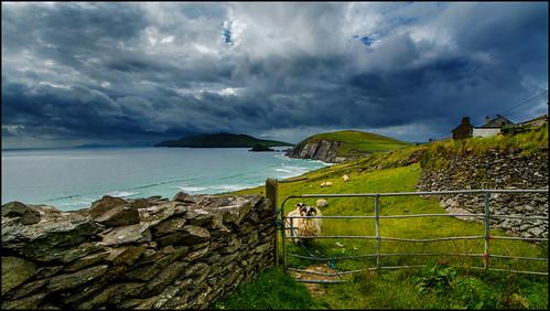 Schafswetter