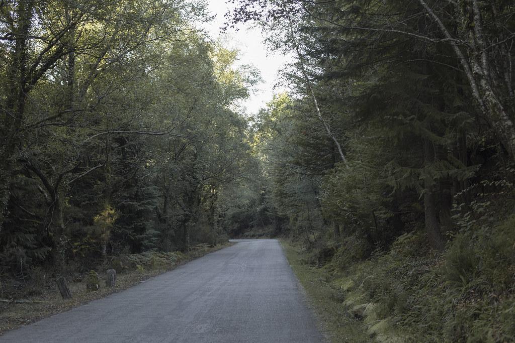 Geres_floresta_1