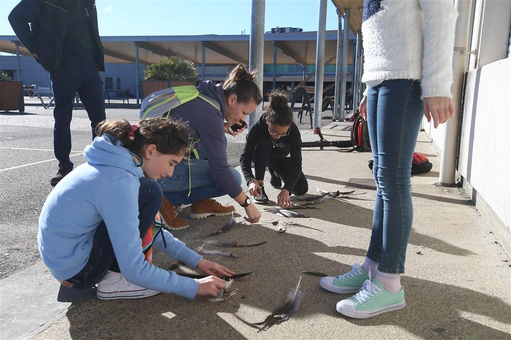 Les collégiens de Labouheyre réalisent le carnet de voyage d'une grue cendrée en migration