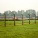 13. Barracones y verjas metálicas de Auschwitz