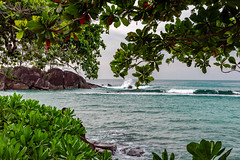 You can hear the waves if you look close enough. Seychelles