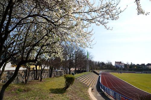 Stadion des Friedens (TSV Leuna 1919)