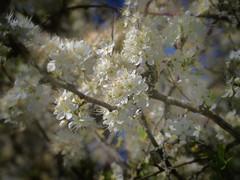 Weymouth - Radipole & Lodmoor Reserves