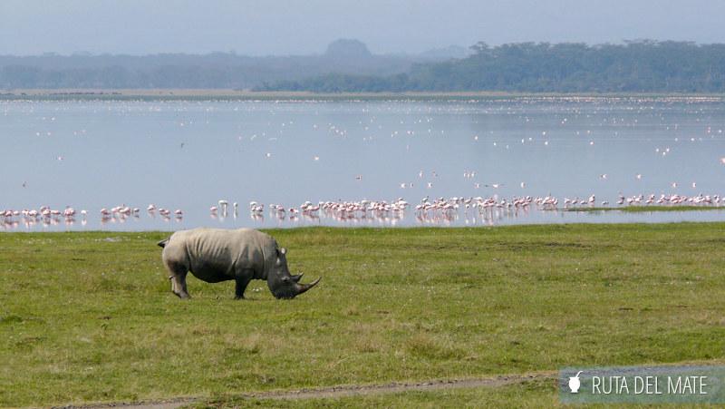 Animales hacer un safari P1130671