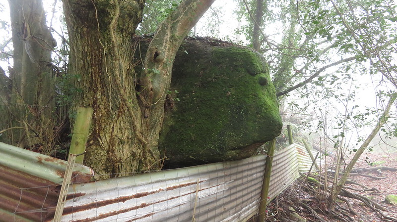 Linscott Tor lower outcrops
