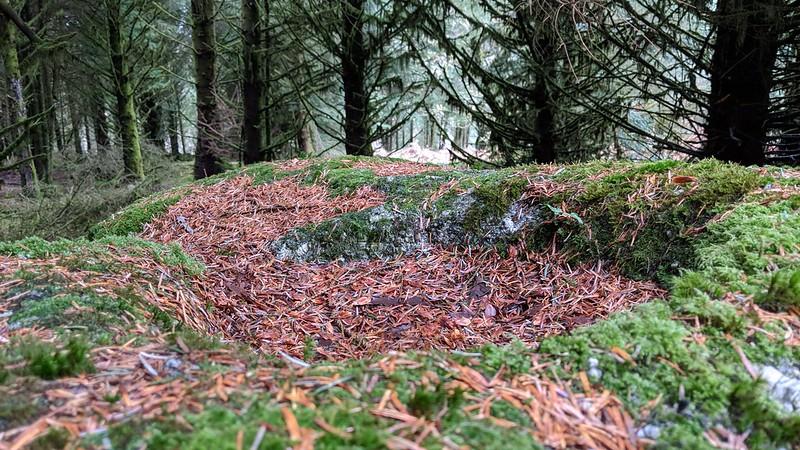 Rock Basin, Rough Tor (Burrator)
