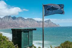 Shark hut