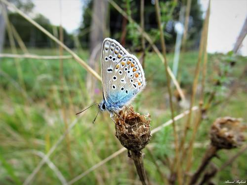 Butterfly 1765