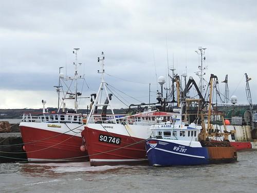 Mellifont, Jeddie and Alize at Duncannon Harbour