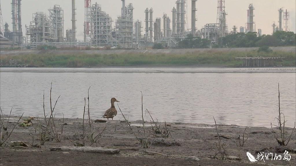 林園愛鄉協會理事長陳俊強期望,透過發展賞鳥生態旅遊,翻轉林園長期布滿重工業的形象。