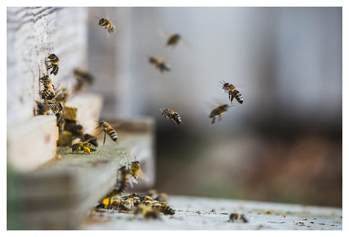 Bee delivery system 2