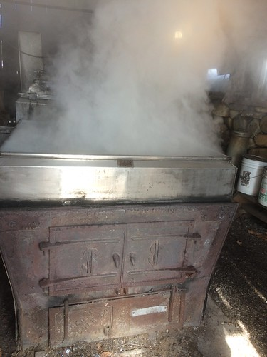boiling maple sap, Westhampton, MA