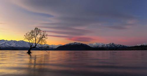 Stunning Sunrise, That Tree, Wanaka, New Zealand