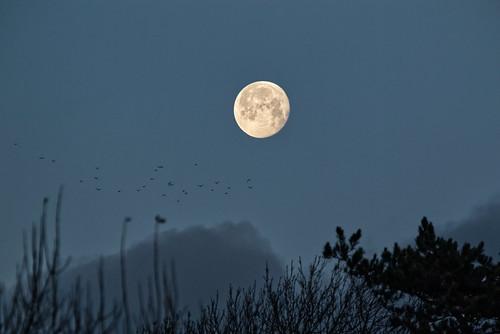 Moon 24Dec2018 IMG_5225