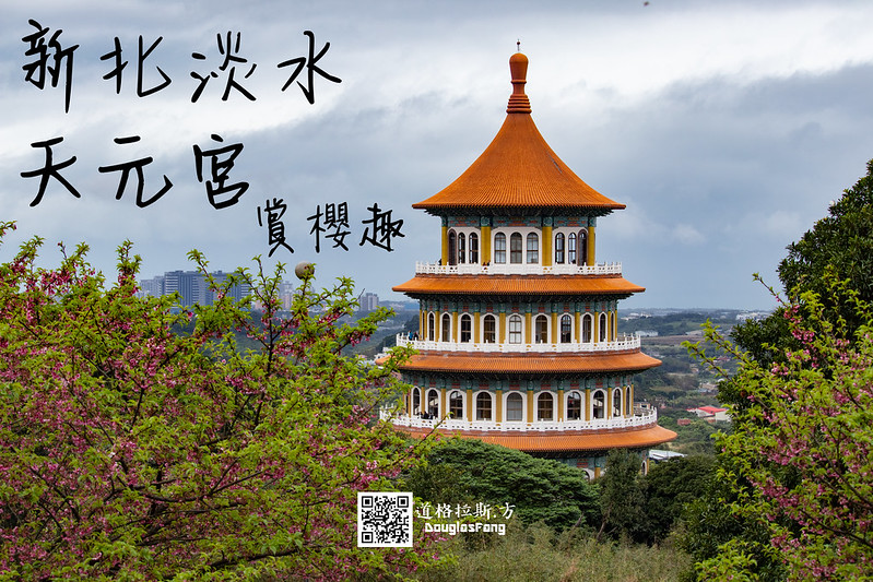 【遊記】新北淡水天元宮後山三色櫻 (1)