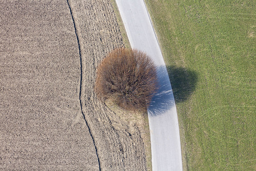 Spherical Tree