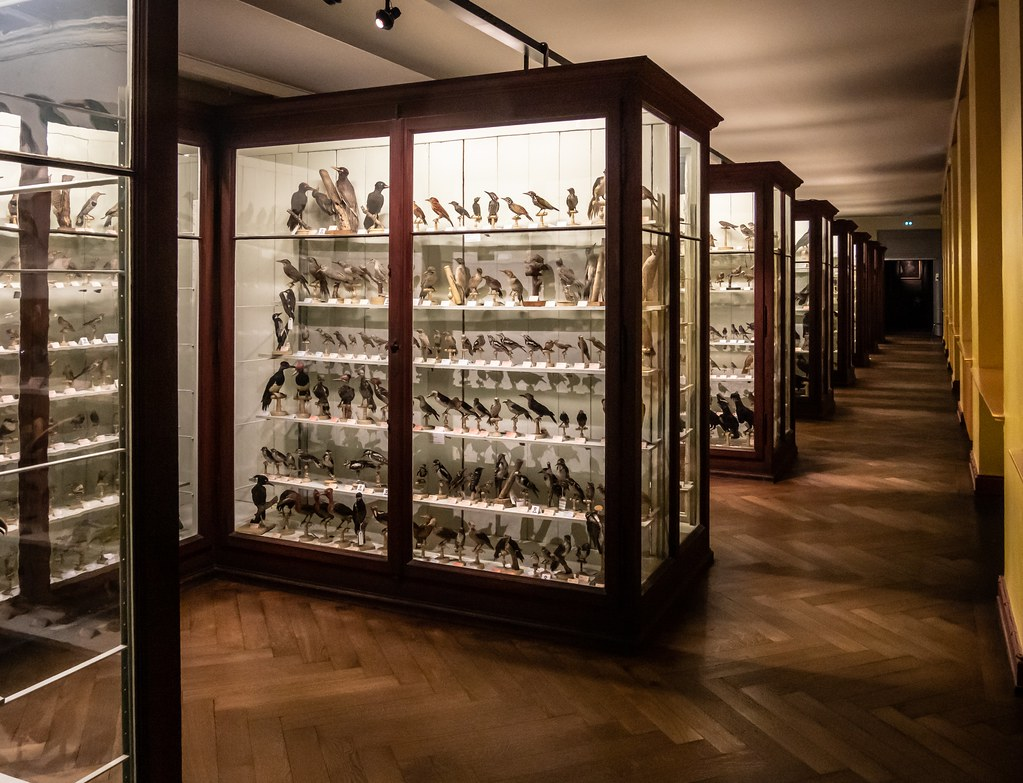 La galerie des oiseaux... 47110270801_ea09c36f70_b