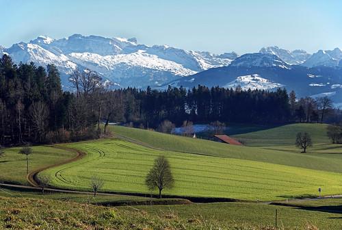 01624 Vorfrühlingszeit im Zürcher-Oberland